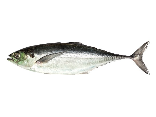 Indian horsemackrel Torpedo Scad 2-3 pcs 10 x 1 kilo - IN