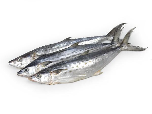 JONA Kingfish (Scomberomorus Spp) WG 400-700 g 10 kg IQF-SR
