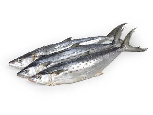 JONA Kingfish (Scomberomorus Spp)  WG 700-1200 Gr 10 kg-SR