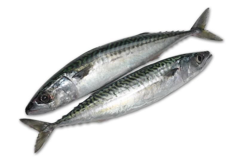 Mackerels WR 300-500 gr 2 x 12,5 Kilo Block-FO