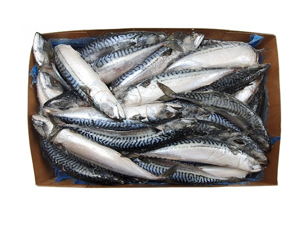 Mackerels Large WR 400-600gr 20 Kilo Block-IE