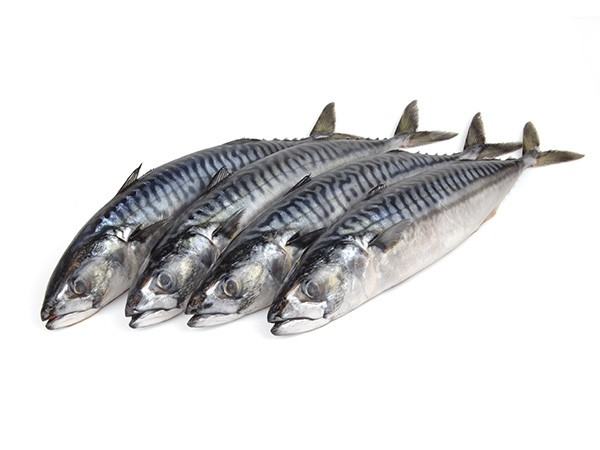Atlantic Mackerels 2-3 pc/vacuum WR 300-500 gr 12 Kilo-IE