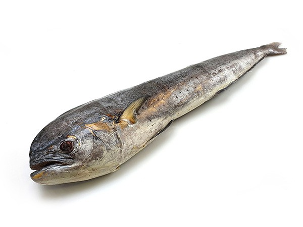 Jona Mahi Mahi Whole Gutted 2000-3000 gr IWP 10 Kg 10% -IN