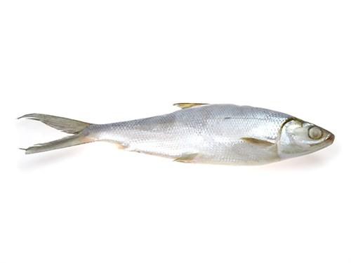 Milkfish WR 300/500 grs IQF/IWP 5 kg 20%-ID