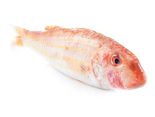Red Mullet  JONA WR IQF 80 Gr+ 8 x 1 kg-- ND