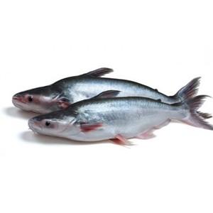 JONA Pangasius WG 500-800 g/pc 10kg 20% IQF / IWP -VN