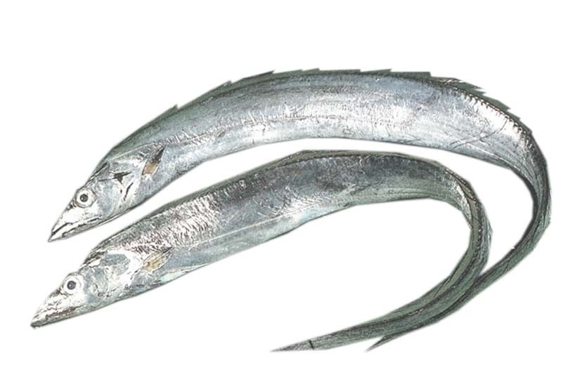Ribbonfish / silverbelt HGT IWP 400-1000 1 x 10 kg-SU