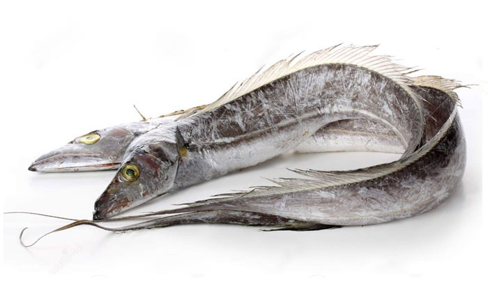 Ribbonfish / silverbelt WR 400-1000 1 x 12 kg-SR