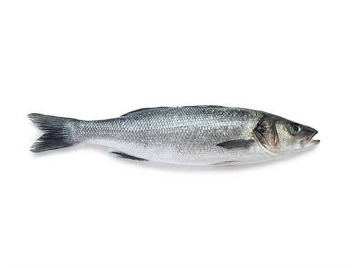 Seabass WR IQF Real Count 300/400 grs 3-5% glaze 15 Kg-TR