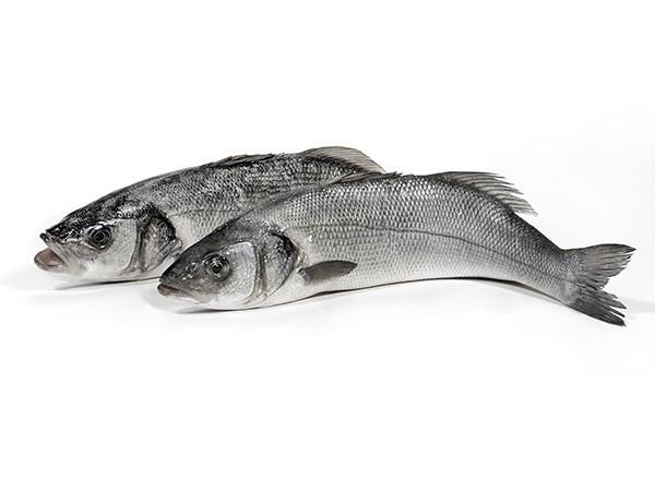 Seabass WGS 400-600 gr 10 x 1 kilo 20 %-TR