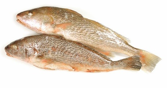 Yellow Croakers WR 500-1000 gr 1 x 10 kg IQF-SR
