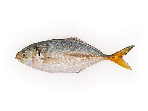 Yellow Tail Scad Whole / Atule Mate 4-6 pcs 10 x 1 kg 10%-IN