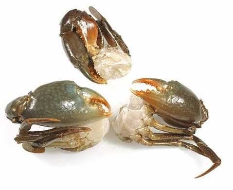 LARGE Cut Grand mangrove Crab (4-8 pc/kg) 12 x 1 kilo-MG