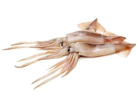 Shortfin Squid WR 100-300 gr 5 kg Block 10%-NL