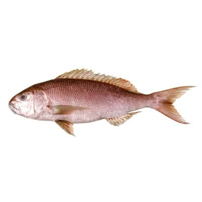 Kingsnappers/Jobfish WR IQF IWP 21 kilo 3000gr up 100% NW-IN