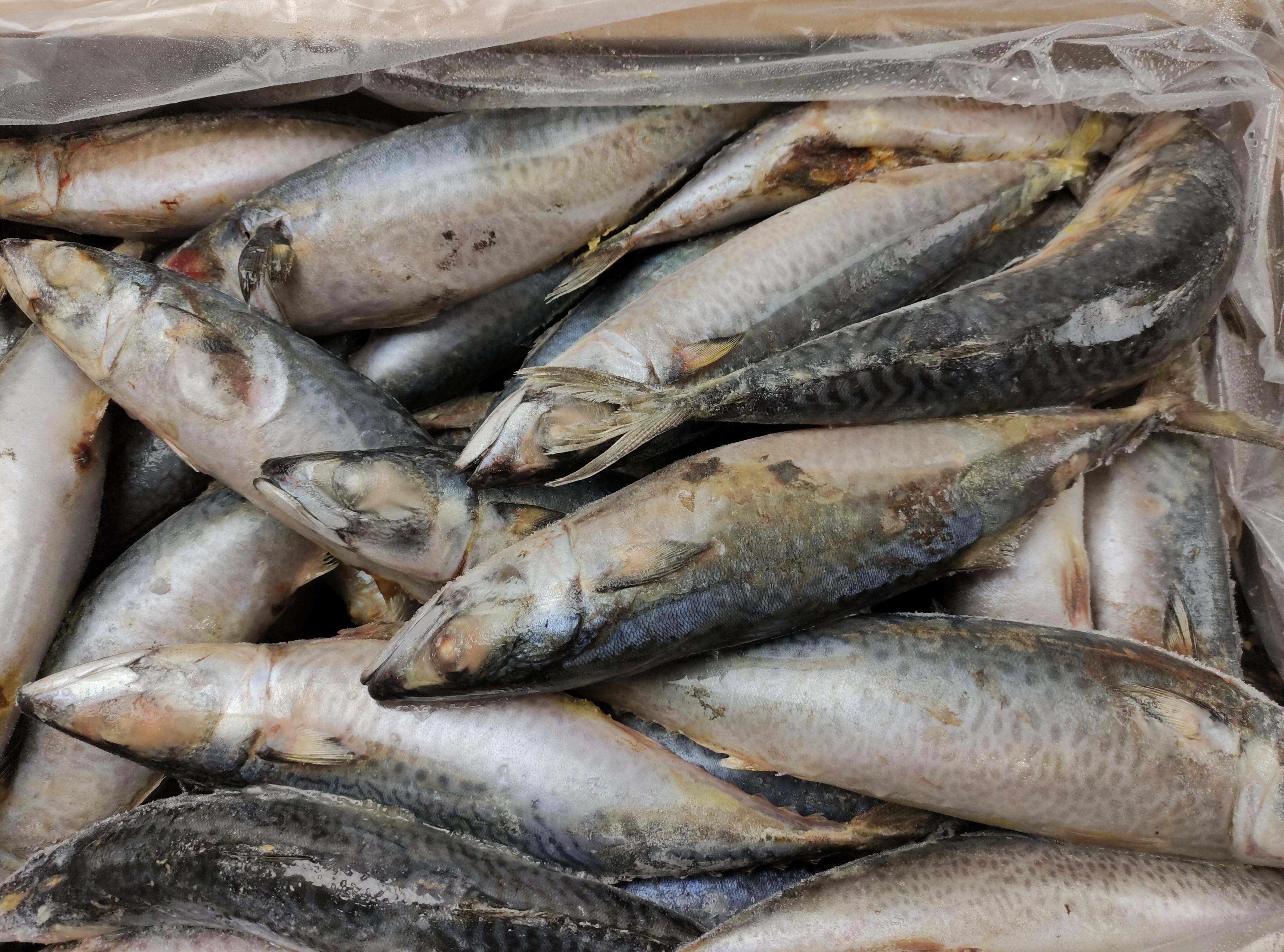 Mackerels Whole 100-400 20 kg- MA