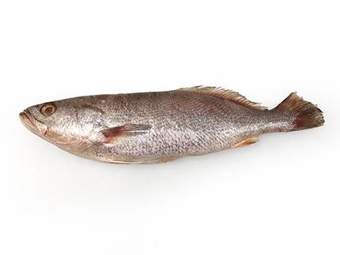 Jamaica Weakfish/Weti-Weti/Akoupa 400-800 gr WR 10 Kg -SR