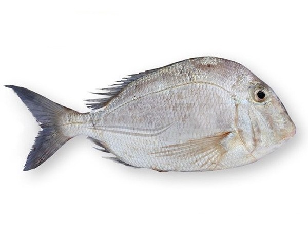 Silver Snapper (Larimus Breviceps) 200-500 gr IQF 10 Kg-SR