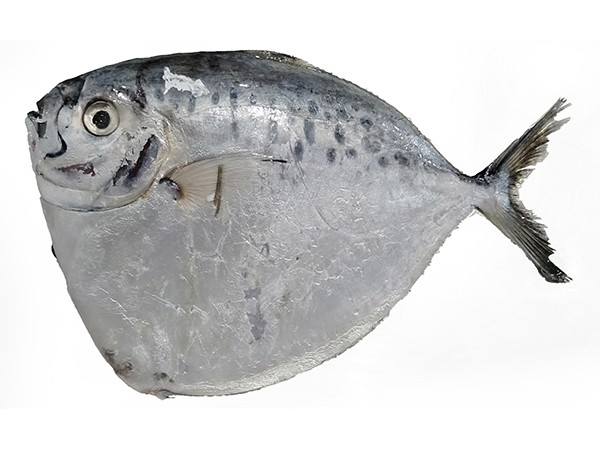 Moonfish / Bilong Bilong / Luneur 6-8p VAC 10 x 1 Kg 10%-VN