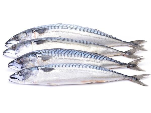 Mackerels WR 150-300 gr 10 x 1 Kilo-NL