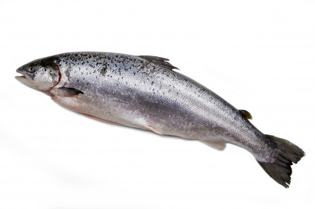 Atlantic Salmon / Salmo Salar WG 1800gr+ IQF 10kg-NO