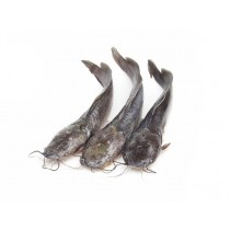 Catfish JONA gutted 300-500 gr 4 kg IQF 20 %-ID