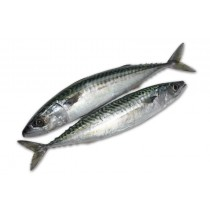Atlantic Mackerels Whole Round 150-350g 20 Kilo Block-IE
