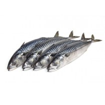 Atlantic Mackerels 2-3 pc/vacuum WR 300-500 gr 12 Kilo-IE