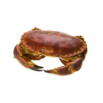 Brown crab unsorted unclean 10 kg - NL