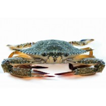 JONA Blue Swimming Crab whole 200 gr+ 2 x 2 kg-CN