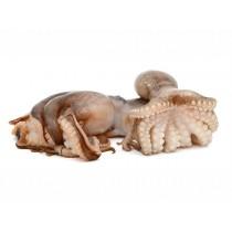 JONA Octopus Vulgaris Portugal Clean 1-2 Kg Tray 14kg 100%