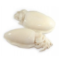 Cuttlefish / Sepia Whole Clean 1/2 pcs/kg 1 x 10 kg IQF -IN