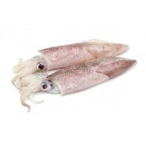 Squid Whole Loligo Duvauceli 6-10 5 x 4 kg 10%-IN