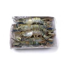Fresh Water shrimps HOSO 6/8 10 x 1 kg 30%-BD