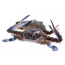 Blue Swimming Crab Wild Catch Sri Lanka 200g+ 5 x 2 kg - LK