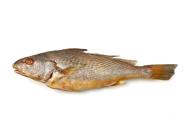 Yellow Croakers Gutted & Scaled 800-1200 gr 2 x 3 kg-AR