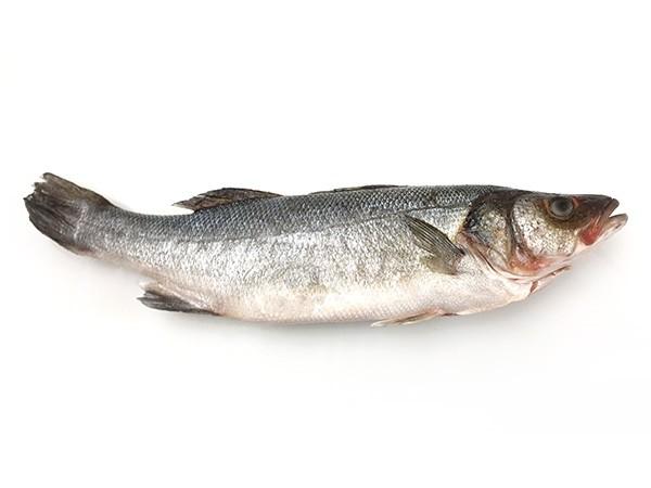 Seabass WGS IQF 800 gr+ 10 kilo 20 %-TR