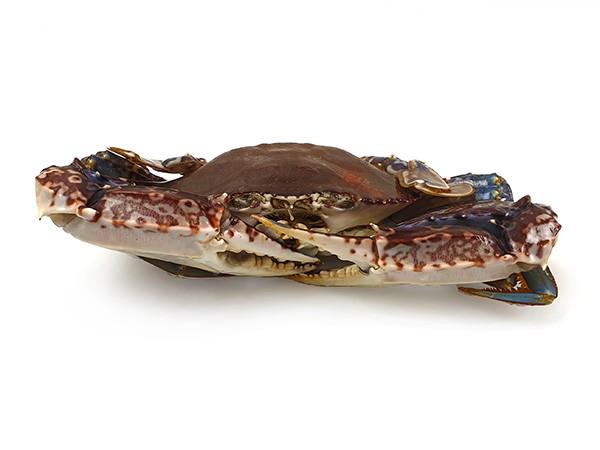 Crab West Africa Primstar Whole Round 200 IQF 8 kg-Nigeria
